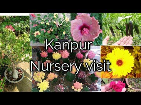 Kanpur Nursery visit