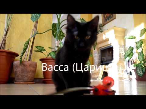 Помет от 22.06.15г.  черные котята