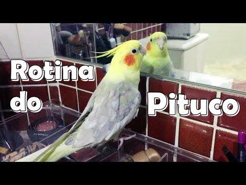 A ROTINA DO PITUCO