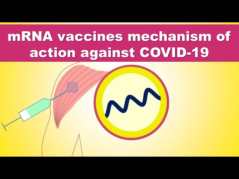 Coronavirus Vaccine (SARS-CoV-2) Delivered For Clinical Trials - MRNA Vaccine Against COVID-19