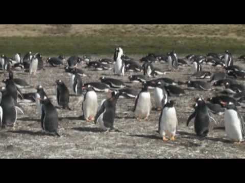 Trip to the Falkland Islands
