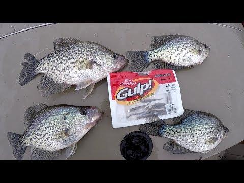 Crappie Fishing With The Berkley Gulp Minnow