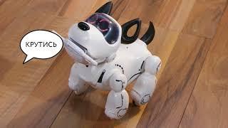 Инструкция собака робот Pupbo на русском языке