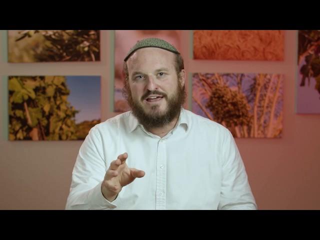 Vayechi – Eyes of Honor – Rabbi Shlomo Katz