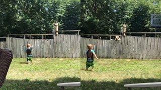 いっくよ~!投げるよ~!塀を挟んでの子供とわんこのキャッチボールが激カワイイ