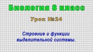 Биология 8 класс (Урок№24 - Строение и функции выделительной системы.)