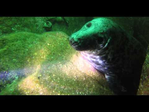 Lovely Seal Mum - Farne Islands - Deep Blue Pirates - UK