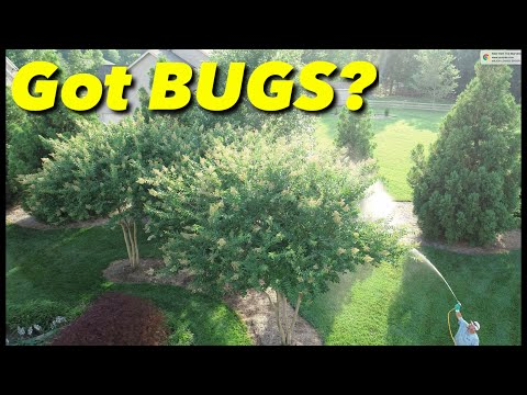 Spraying Trees For Bugs