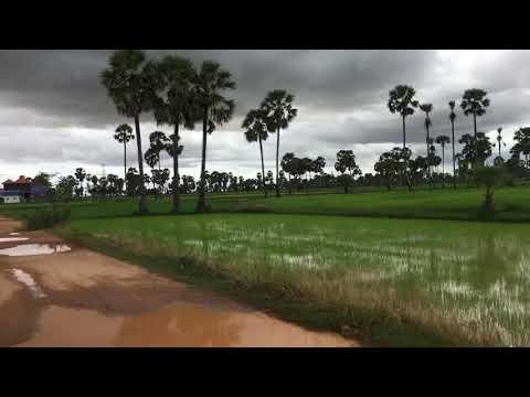 Rural area at rain season,  សម្រស់ស្រុកស្រែស្រស់បំព្រង
