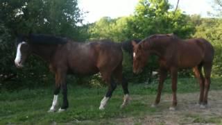 Reproduction chez le cheval