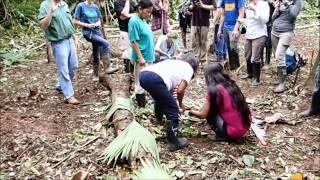 Kichwa yuca planting ritual / El rito de sembrar el yuca de los Quichua