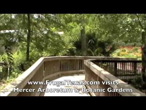 Mercer Arboretum & Botanic Gardens - Frugal Things to Do in Houston from www.SpendWiselyTexas.com