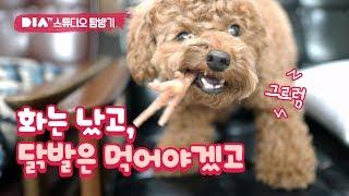 닭발을 먹던 강아지가 화가 났어요. 왜? (feat.다이아티비 탐방기) Angry dog eating chicken foot!