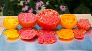 Tomatoes, The Best Varieties?