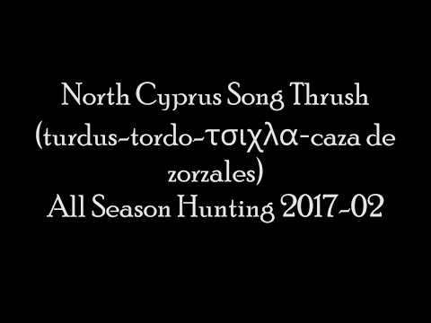 North Cyprus Song Thrush (turdus-tordo-τσιχλα-caza de  zorzales) All Season Hunting 2017-02