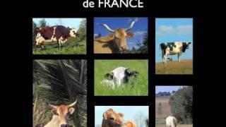 Toutes les races de vaches de France
