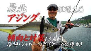 【青森県】最北アジング傾向と対策/藻場・シャローのデイゲームで爆釣!~家邊克己 thumbnail