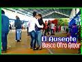 Video de Mazatlan Villa De Flores