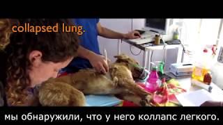 Собаку сбил поезд, разорван нос, спасение