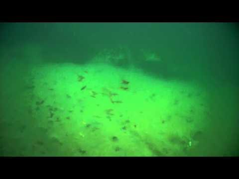 Underwater Footage of LRF Lure with lots of small