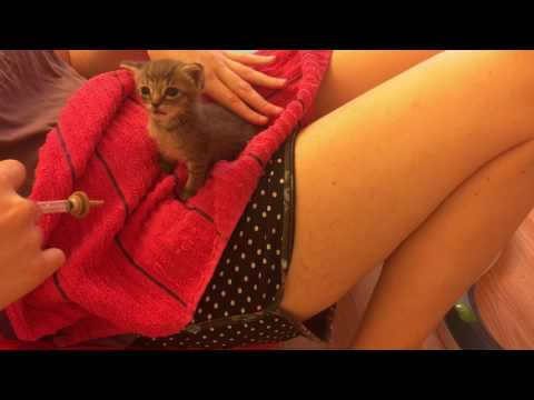 Bottle Feeding/ Syringe Feeding Foster Kitten Piper that Can't Nurse Because of Stuffy Nose
