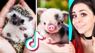 Cute BABY ANIMAL Moments TikTok Compilation