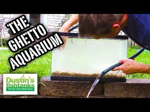 How To Setup a Ghetto Aquarium, the 'I'm Broke Aquarium' Quick & Easy