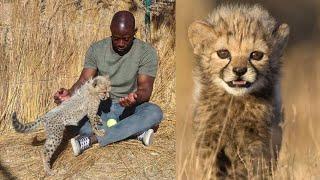 Cute Baby Cheetahs + Cheetah Purring & Noises