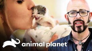 es-da-de-adopcin-mi-gato-endemoniado-animal-planet