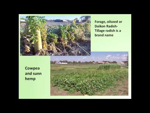 Kerry Clark:  Cover Crop  Research in Organic Crop Production