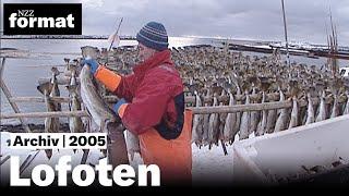 Lofoten: Ohne Dorsch kein Stockfisch - Dokumentation von NZZ Format 2005