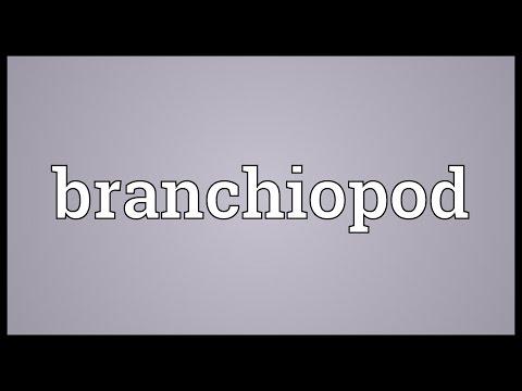 Header of branchiopod