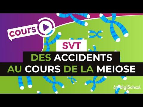 Des accidents au cours de la meiose - SVT - TS - digiSchool