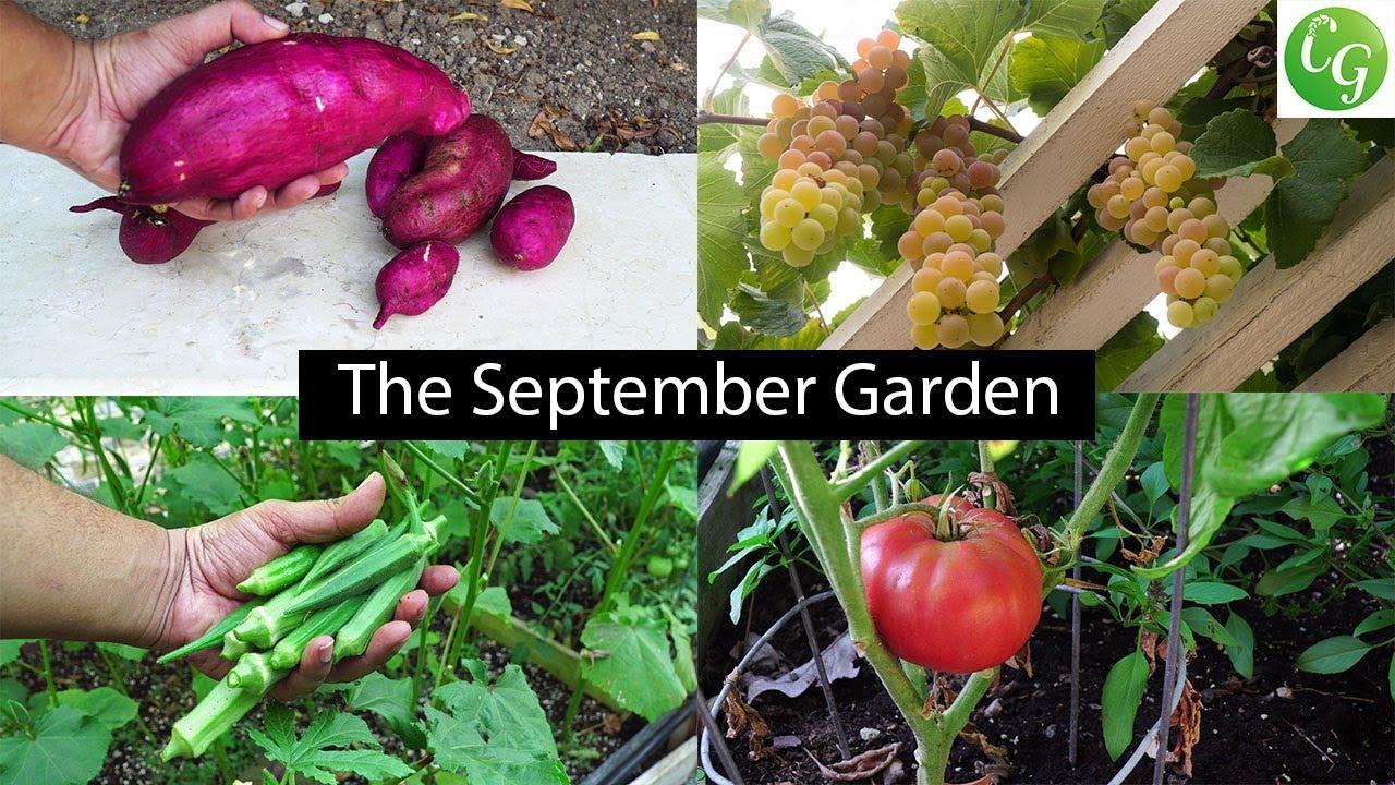 The september garden plenty of harvests fall gardening preps youtube - Gardening in fall ...