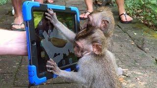 Crazy Monkey Magic  Simon Pierro