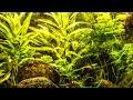 Timelapse Test - Ken Burns Effect - Akvarium