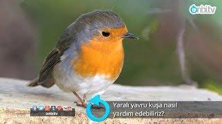 Yaralı kuşa nasıl yardım edebiliriz?