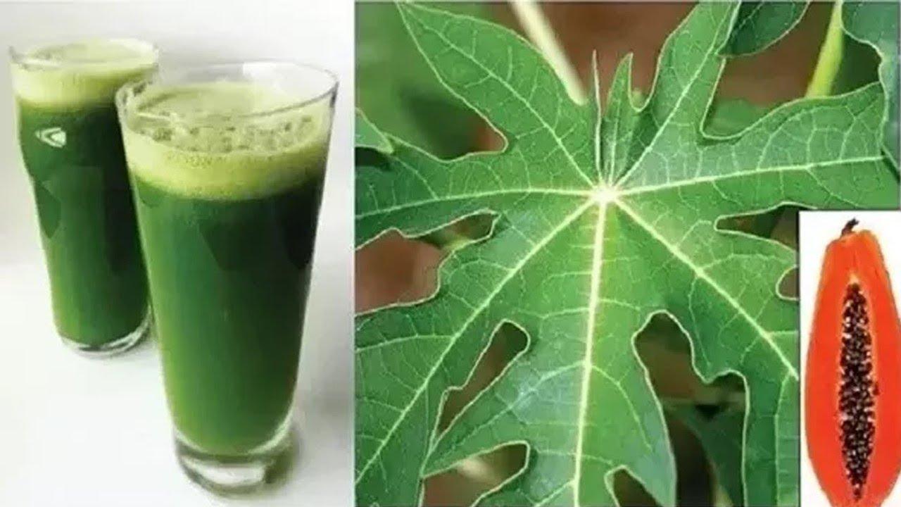 இதில் .1 இலை சாறு அதிகநன்மை பயக்கும். நன்மைகள் என்ன என்பதை அறிந்துகொள்ளுங்கள்//papaya leaf benefits