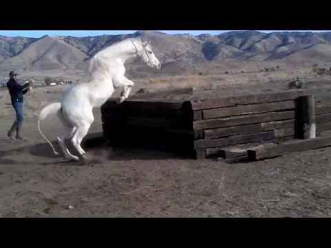 Rex Peterson Training White Horses for The Lone Ranger