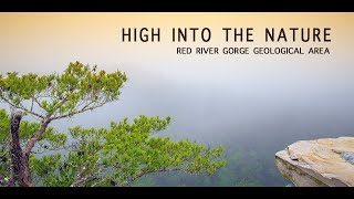 High into the Nature | Red River Gorge Geological Area