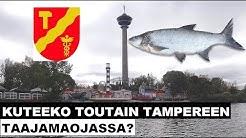 Kuteeko toutain Tampereen taajamaojassa?