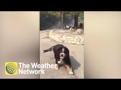 Moment man finds out family dog survived fire (on cam)