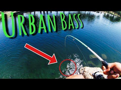 Arizona Urban Bass Fishing 2019