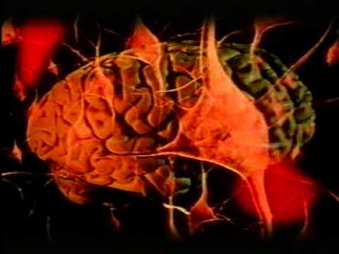 معلومات عن جسم الانسان :الشرايين والاوردة