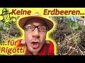 Die beiden lieben sich: Erdbeeren mit Knoblauch. Erdbeersorte: Mara des Bois. MP3