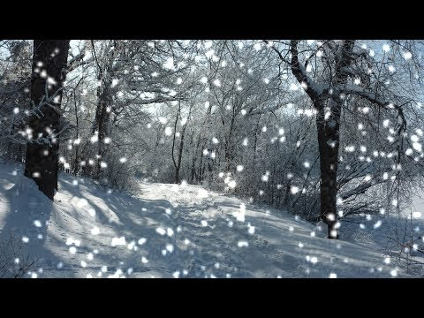 [10 Hours] Sunny Winter Forest w/ Fluttering Snow - Video & Soundscape [1080HD] SlowTV