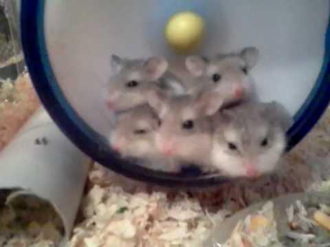 5 baby hamsters same reaction youtube. Black Bedroom Furniture Sets. Home Design Ideas