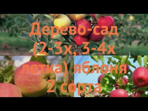 Яблоня обыкновенная Кандиль орловский - Скала 🌿 обзор: как сажать, саженцы яблони