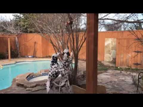 Dog prank fake squirrel