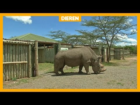 Laatste witte neushoorn mannetje ter wereld dood